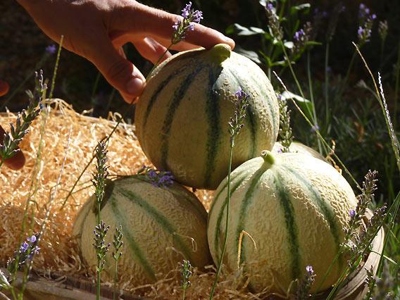 Die Cavaillon-Melonen im Lafayette Gourmet Berlin