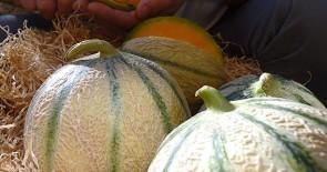 Die Melonen aus dem Cavaillon sind da!