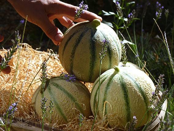 Melonen aus Cavaillon im Lafayette Gourmet Berlin