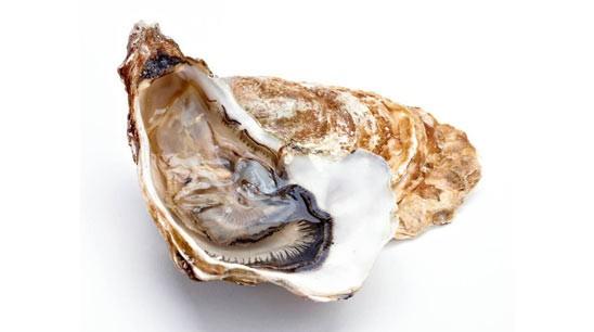 GLafayetteB15-Austern.jpg