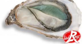 Grüne Auster 1,90€ zur Grünen Woche
