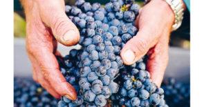 Festival des Vins mit bis zu -20%