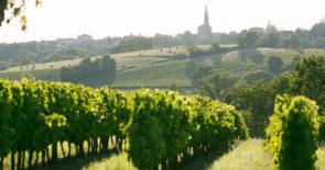 Bordeaux : Weine für Genießer